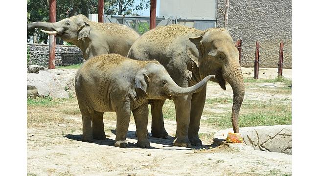 Minik öğrenciler ilk defa yakından fil gördü