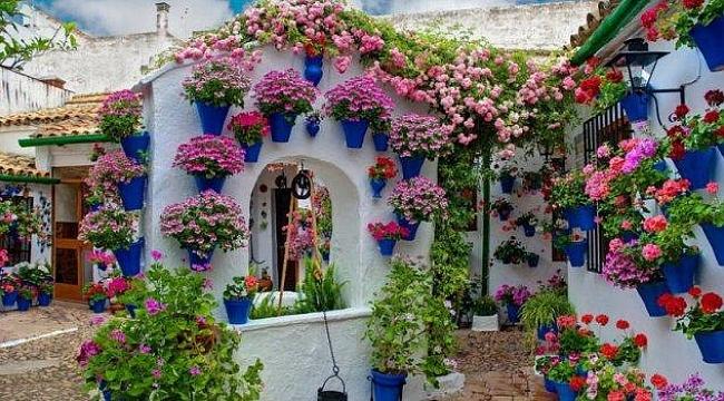 Bayındır Çiçek Festivali başlıyor