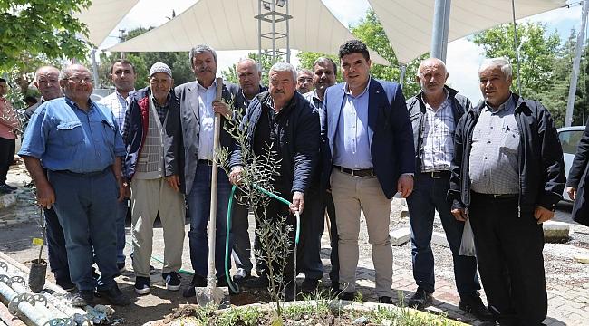 Başkan Kılıç, Buca'da zeytin fidanı dağıttı!