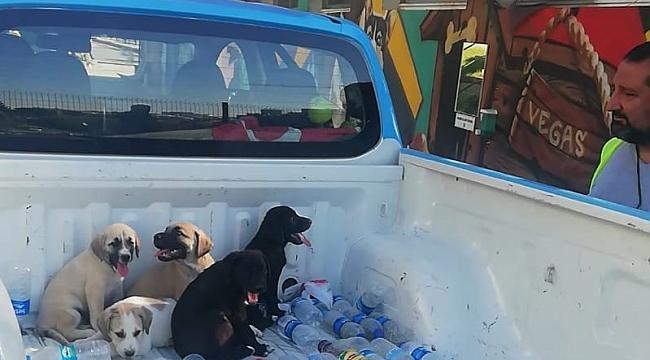Buca Belediyesi dört yavru köpeği hayata döndürdü