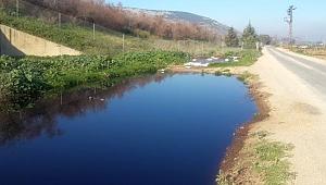 Doğal Çevrenin Baş Belası: Zeytin Karasuyu