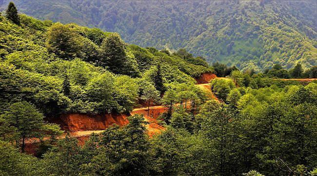 """""""50 yıl sonrası için ormanlarımızı gençleştiriyoruz"""""""